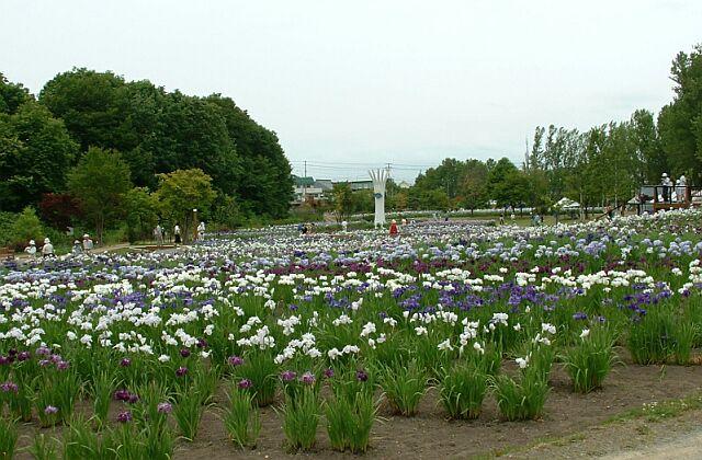 あやめ公園(北海道岩見沢市)