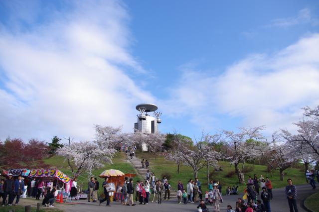 びばい桜まつり1