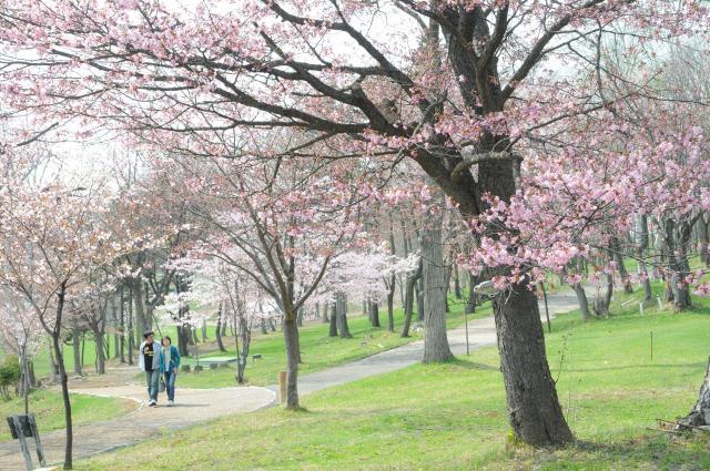 桜山公園(北海道深川市)