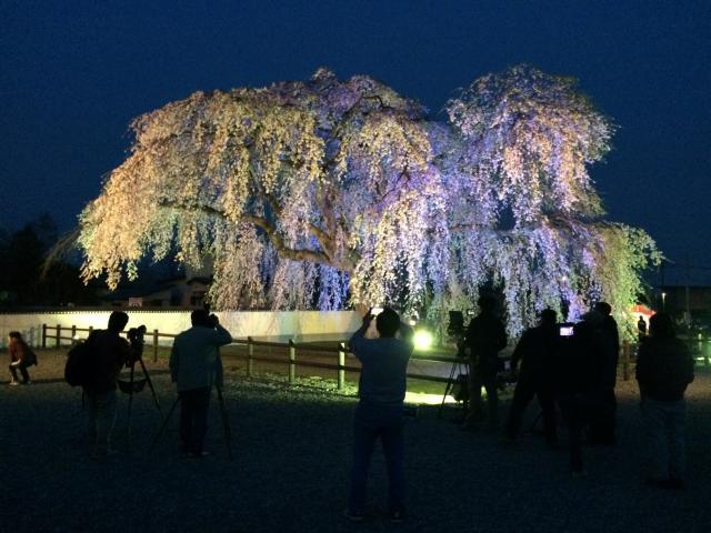 北斗桜回廊 ライトアップ