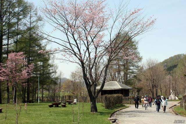 春のワンデーウォーク