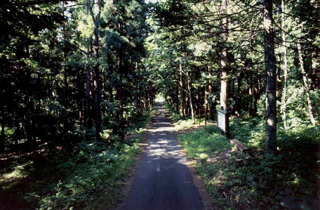 円山公園杉林