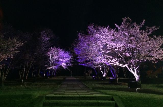 びえい桜まつり