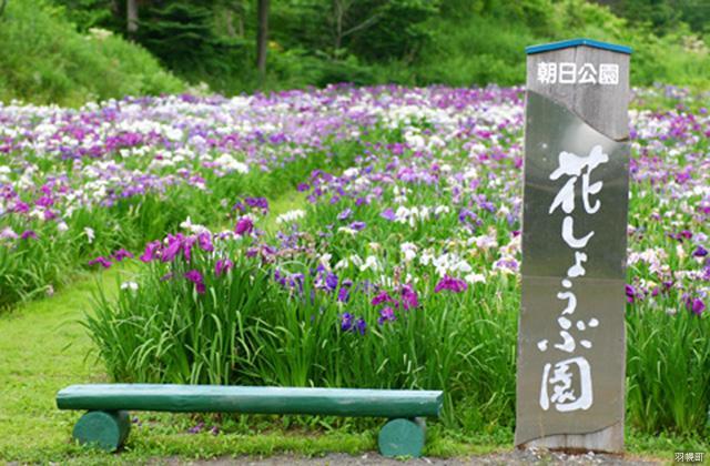 朝日公園花しょうぶ園