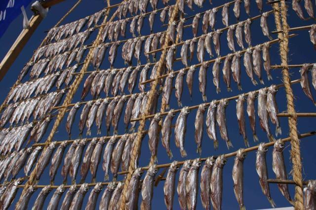 シシャモ(柳葉魚)