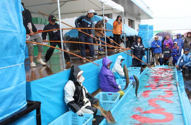 サケ釣り大会