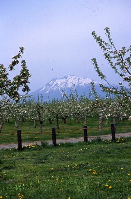 弘前市蘋果公園