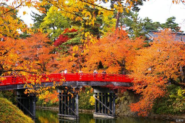 弘前城菊和紅葉節