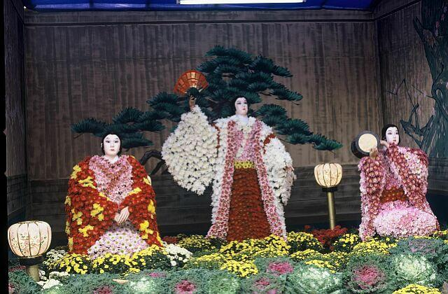 It is worshiped chrysanthemum to one of bee