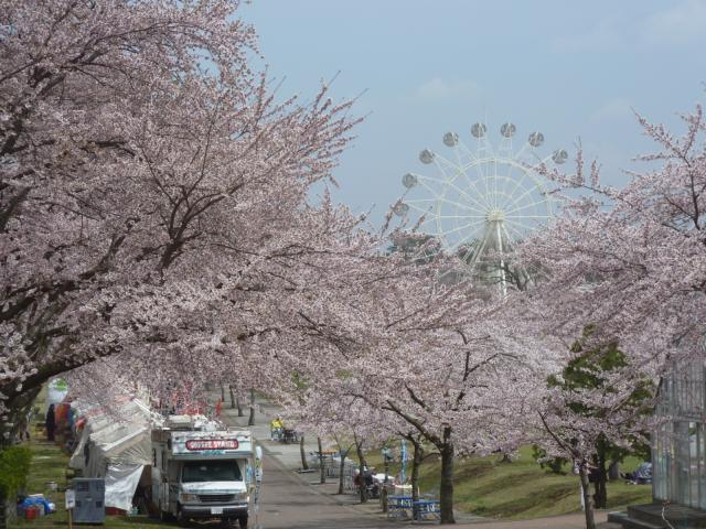 Hachinohe Park Spring Festival★02203ba2210135798