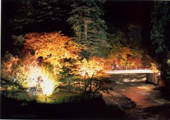 We light up Nakano maple mountain