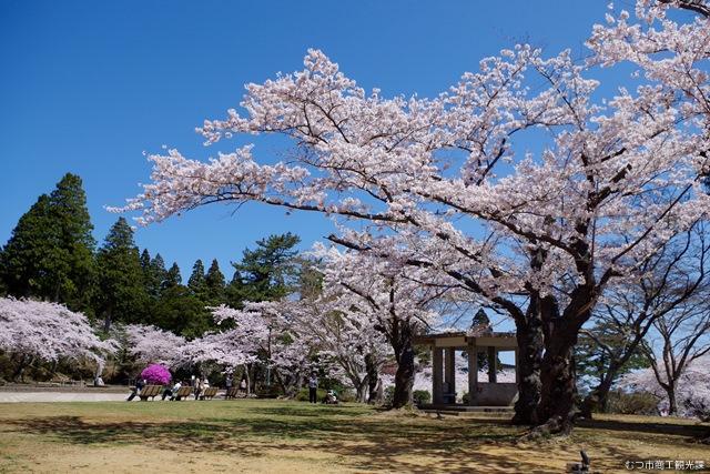 むつ桜まつり