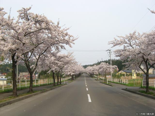 来さまい大畑桜ロードさくらまつり