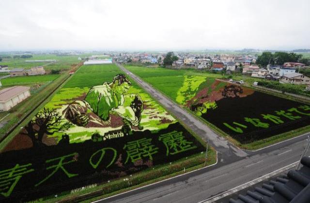Inakadate Art of Rice Field
