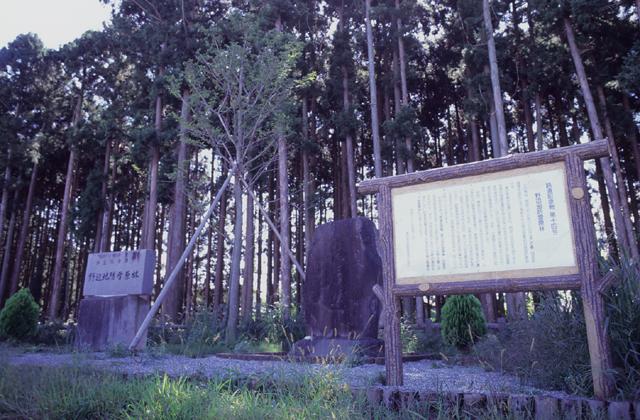 日本最古の鉄道防雪原林