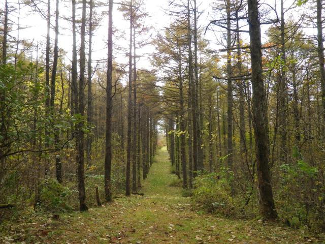 種山ヶ原森林公園