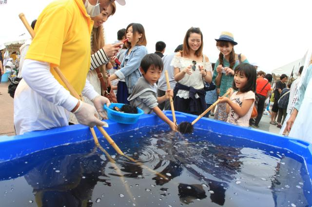 taneichi海膽節