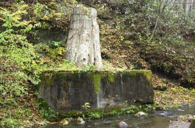 根反の大珪化木