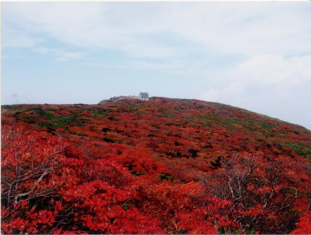 船形山の紅葉と高山植物