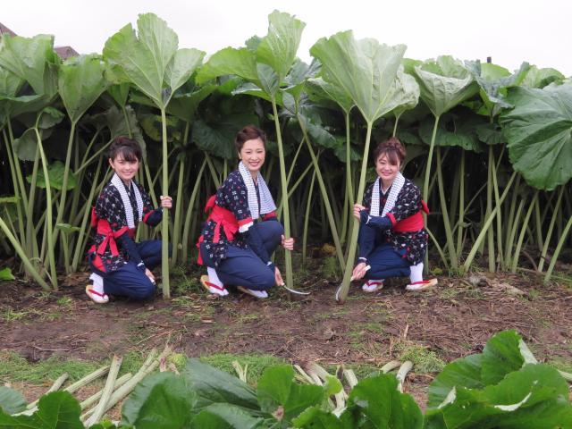 蕗刈り撮影会