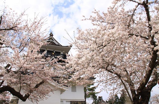 よこて桜まつり