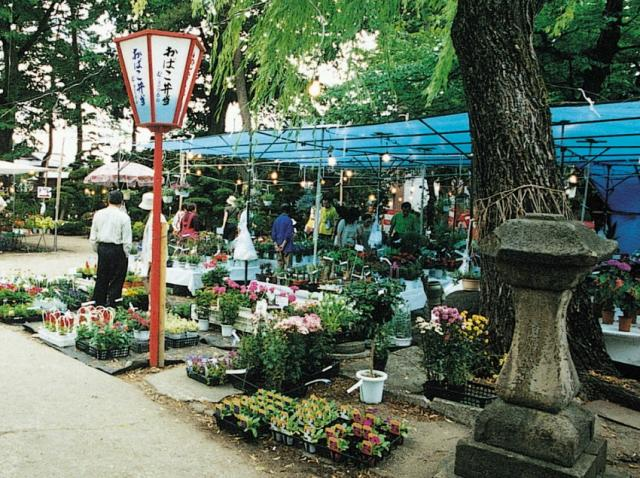 東北植木盆栽市