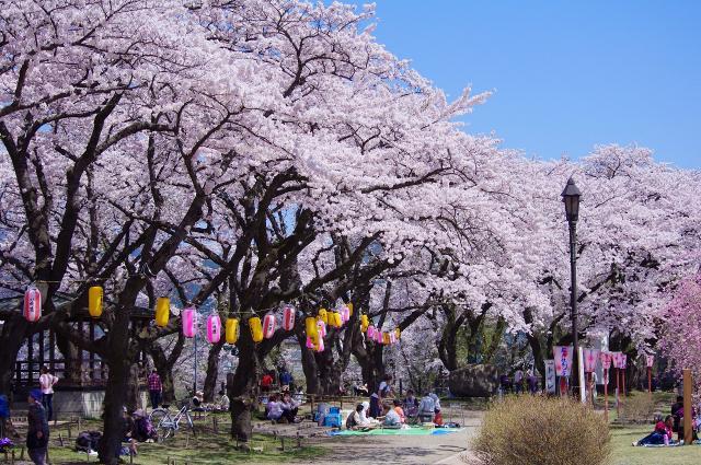 大館桜まつり