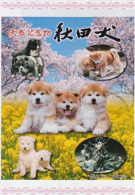 【開催中止】第142回秋田犬保存会本部展
