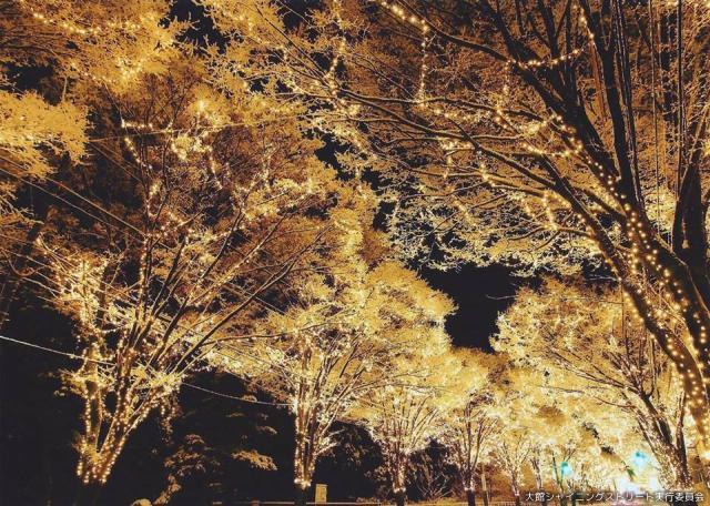 写真コンテスト2015優秀賞(2)『光満開』