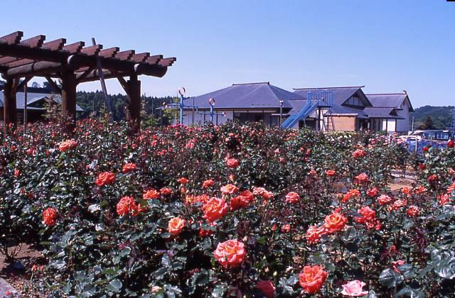 五峰苑のバラ園