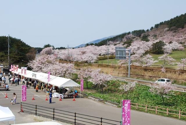 8山峰市鎮櫻花節