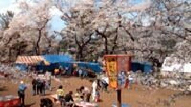 麻雀館公園櫻花節