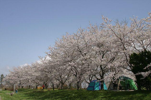 南の池公園キャンプ場