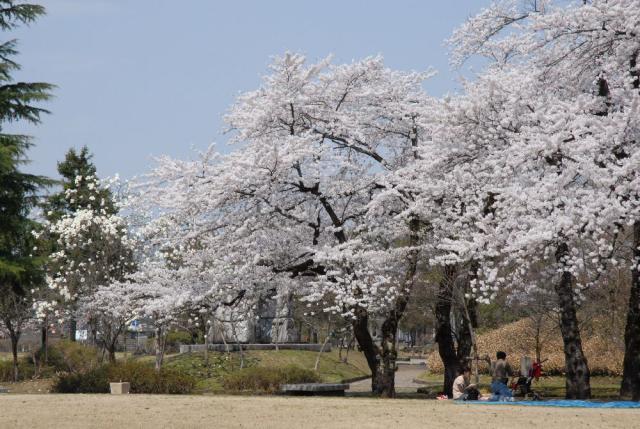 美郷町中央公園
