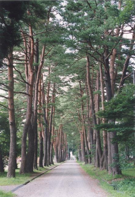 新日本街路樹百景選定松・杉並木