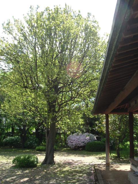 風間家旧別邸庭園