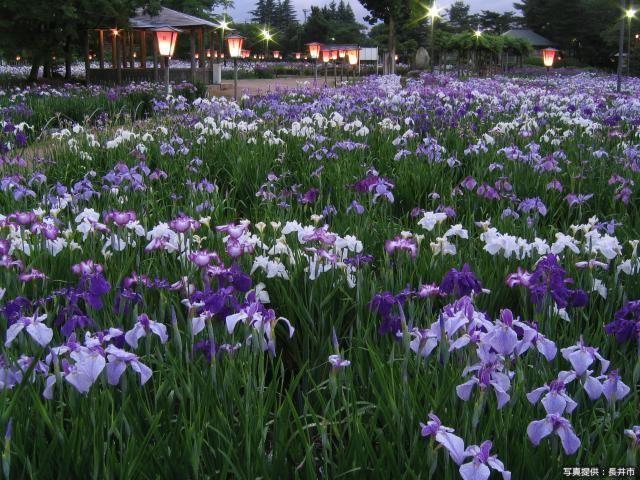 Iris Park★20220ac2102029260