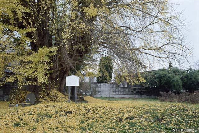 長崎盾遺跡