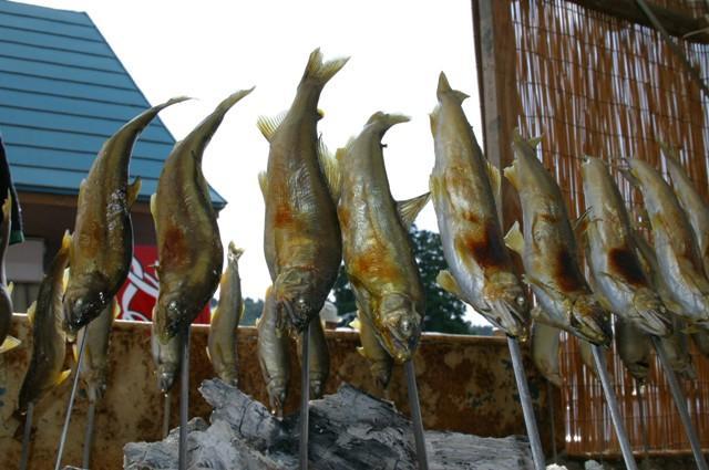 funagata小香魚節
