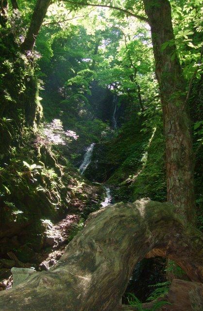 三ッ滝遊歩道