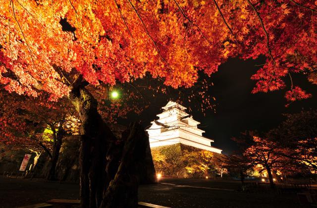 Tsuruga-jo Castle Lighting Up Colored Leaves