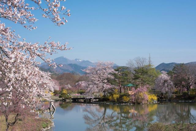 四季の里 緑水苑の桜