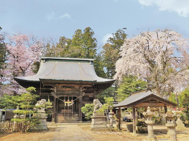 田村神社の桜