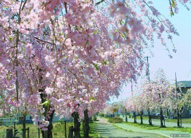 蔵のまち喜多方桜ウォーク