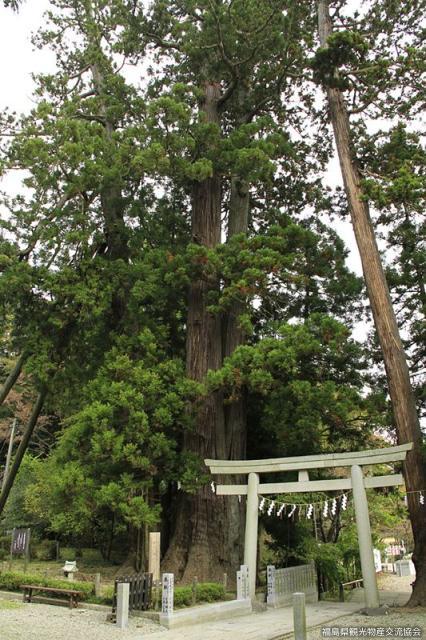 相馬中村神社の親子杉