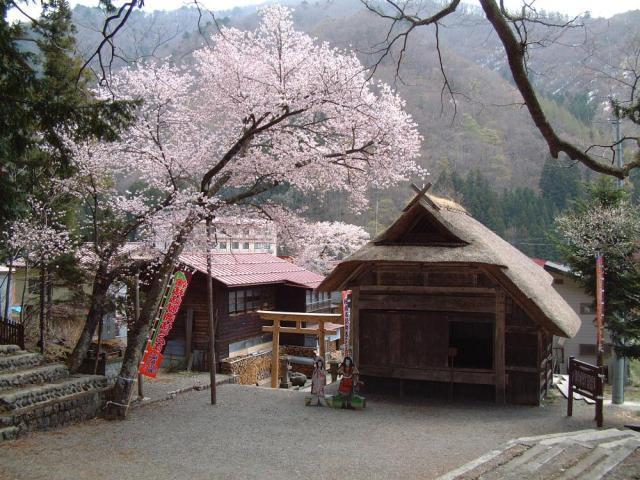 檜枝岐の舞台と山桜