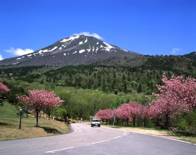天鏡台の桜