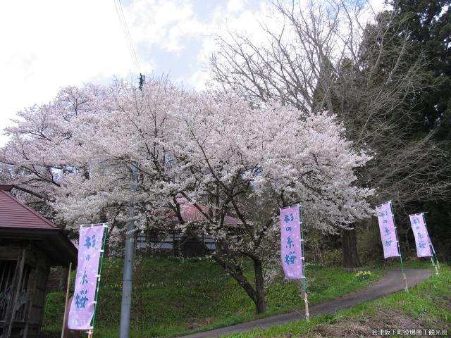 糸桜まつり