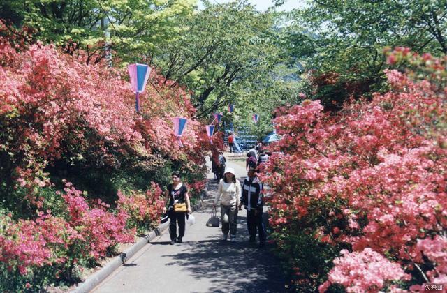 矢祭山花まつり