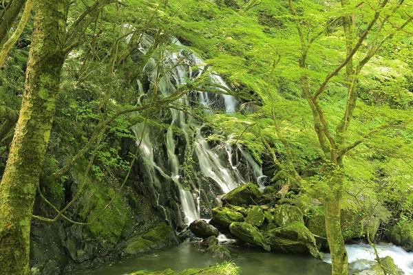新緑の江竜田の滝